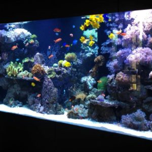 A marine aquarium full of fish.