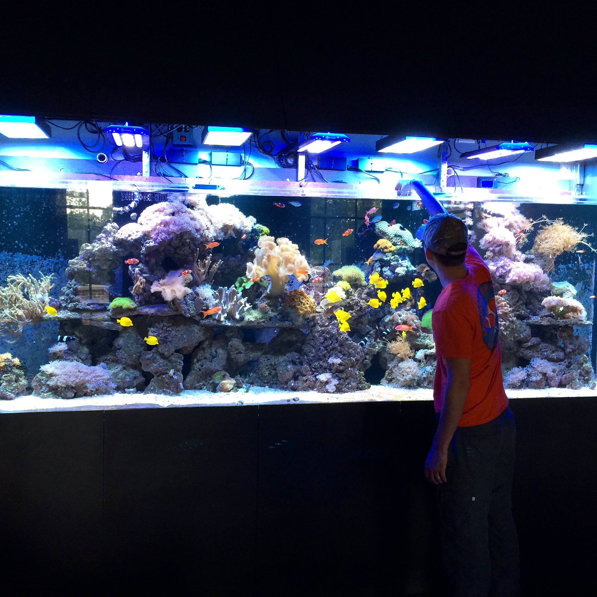 Aquariums Alabama Aquarium Pond Services Inc
