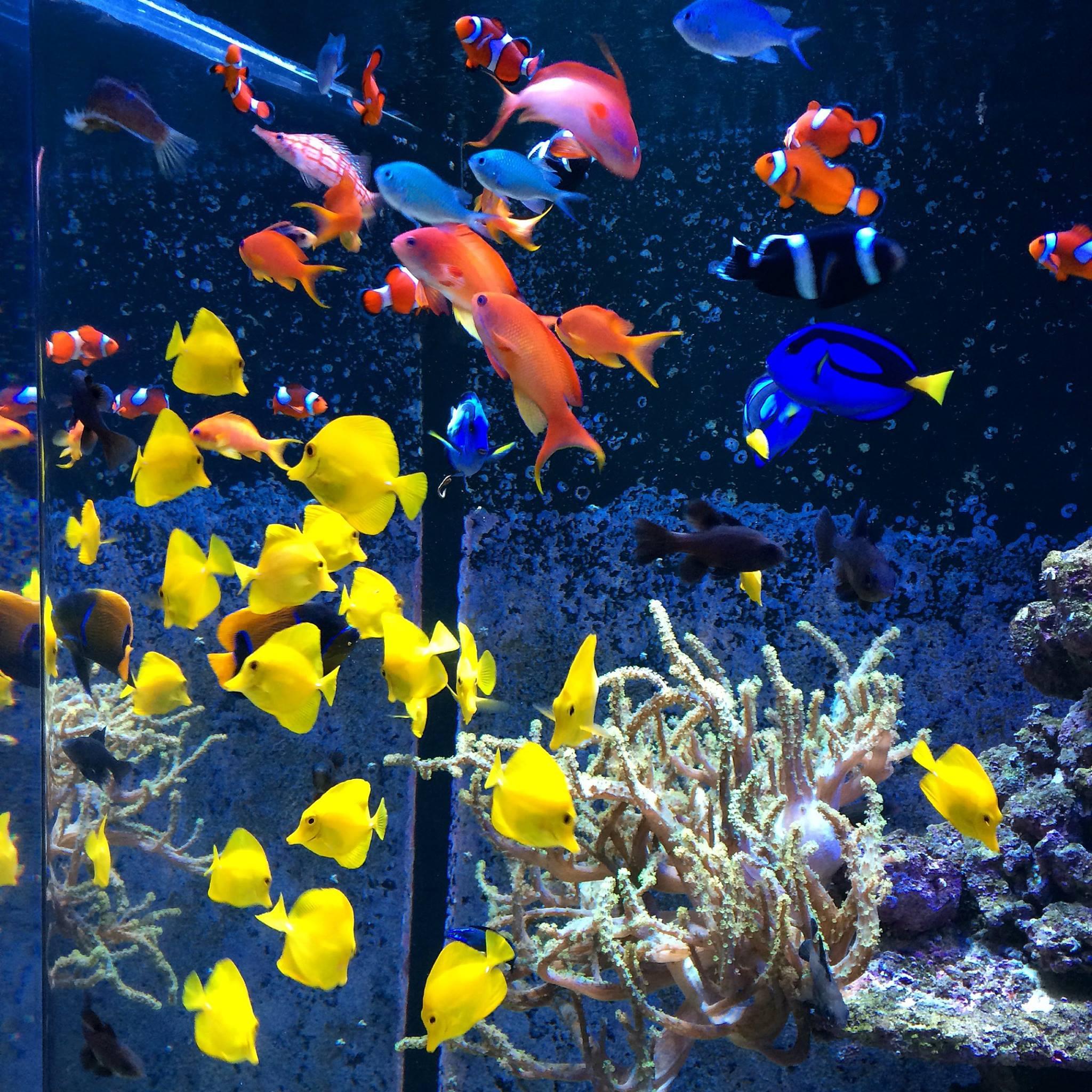 Aquariums alabama aquarium pond services inc for Pond aquarium