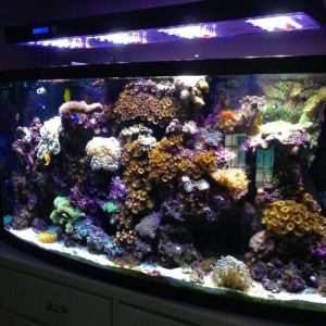 A custom aquarium full of reef life, live coral and fish.