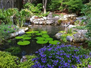 A picture of a beautiful water garden with water lilies in a backyard.
