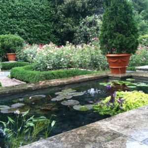 A small formal water garden with plenty of plants inside surrounded by formal landscaping.