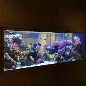 An aquarium installed in a wall between two rooms.