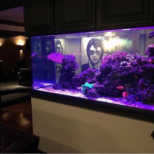 An aquarium installed in a restaurant.