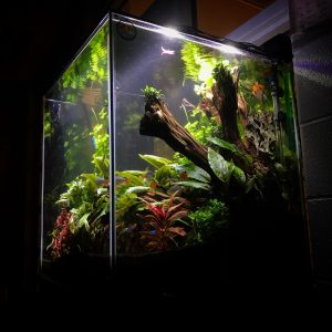 A custom built aquarium with vibrant freshwater plant aquascaping.