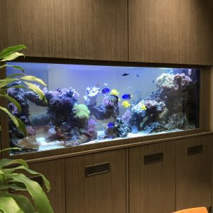 An aquarium installed in an office setting.