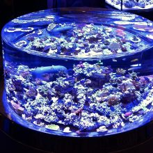 A custom, circular marine aquarium with coral and fish.